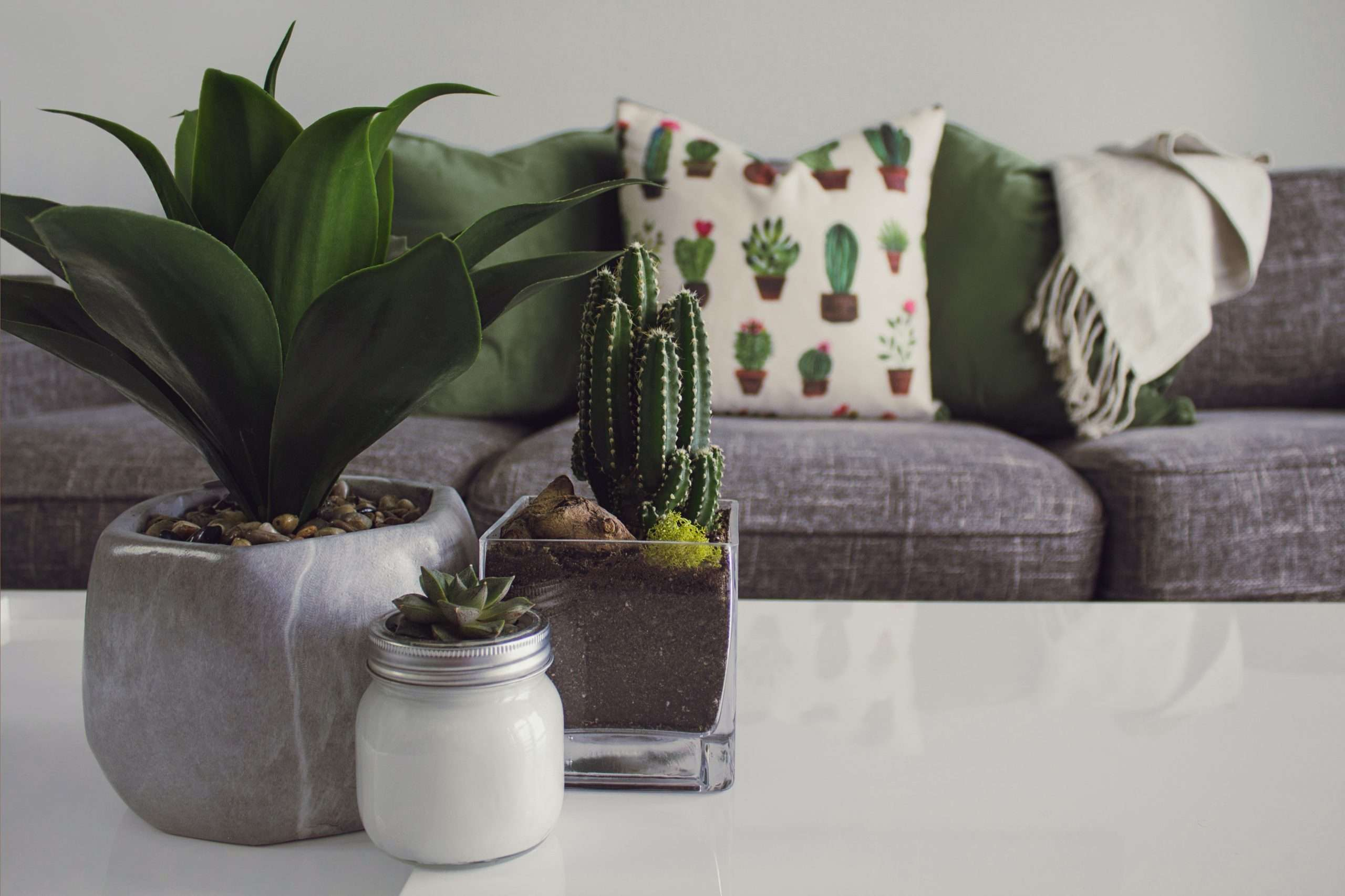 Sofa with pillows and plants on coffee table